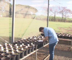 Bacharelado em Agroecologia UFSCar Araras