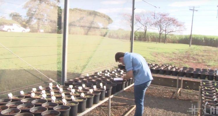 curso-agroecologia-ufscar-campus-araras-labi