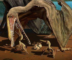 Espetáculo de pterossauros (e da Ciência brasileira)