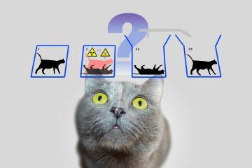 O gato não morre, mas a teoria quântica some
